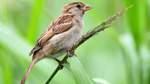 Bestände der Gartenvögel nehmen leicht zu