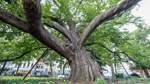 Welche besonderen Bäume es in Bremen gibt