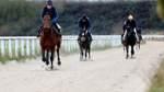 Galoppsport auf Trainingsanlage in Mahndorf boomt