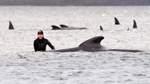 Fast 100 Wale nach Massenstrandung gerettet