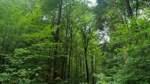 Erdmannwald Schwaförden