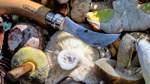 Fotoreportage - Der Pilzsucher - Der Bremer Simon Makhali ist Pilzsachverständige
