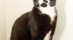 Katze Tiffy wünscht sich Streicheleinheiten