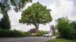 Schutz für ortsbildprägende Bäume