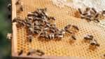 Rätselhafte Bienenwelt