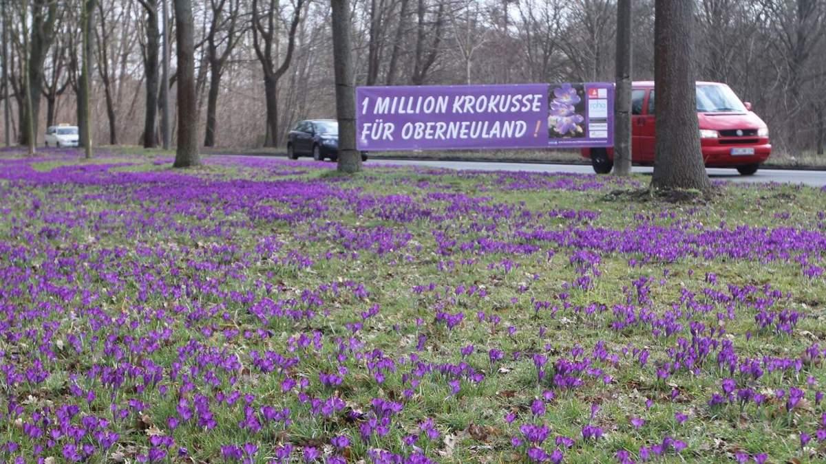 Lila Blütenpracht an der Franz Schütte Allee   WESER KURIER