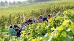 Feine Rotweine aus Deutschland
