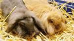 Kaninchen, Hündin und Kater suchen ein Zuhause