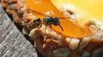 Hochsaison für Wespen