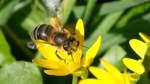 Was Sie über Bienen wissen müssen