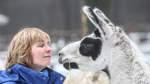 Lamas, Esel und Ziegen auf der Dreptefarm in Wulsbüttel