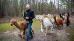 Alpakas finden neues Zuhause