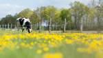 Immer mehr Bauern in Niedersachsen setzen auf Bio