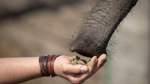 Tierparks ärgern sich über Corona-Schließungen