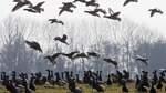 Streit über Jagd im Nationalpark eskaliert