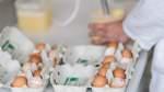 Deutschland sucht die Fipronil-Eier