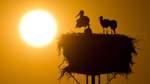 Klimawandel? Mehr Störche bleiben im Winter im Nordwesten