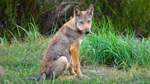 Die sächsischen Wölfe breiten sich aus