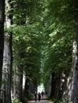 Am Ende der von 55 Baumpaaren gesäumten Lindenallee soll sich nach dem Willen des Gartenarchitekten Peter Richter der Besucher für eine Richtung entscheiden - wie im wahren Leben auf dem Lebensweg, den diese Allee symbolisieren soll.