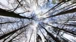Forstwirtschaft und Klimawandel