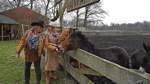 Das letzte Zuhause für Gans und Esel