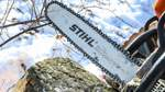 Landkreis lässt 50 Bäume absägen