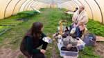 Bauernmarktflair im Wundergarten