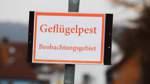 Geflügelpest in BerneundSchiffdorf
