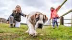 Warum ein Rieder eine seltene Hunderasse züchtet