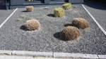 Kampagne gegen Schottergärten