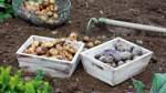 Mit Alphabeet zum Gemüsegarten
