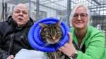Katzen in Bremen sollen es gut haben
