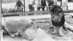 Der Zoo beherbergt in den sieben Jahren seines Bestehens unter anderem Leoparden, Elefanten, Geparden, Löwen, Strauße, Luchse und Tiger.