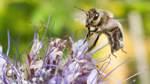 Wenn Landwirte zu Bienenfreunden werden
