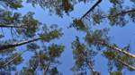 Eintauchen in den Wald