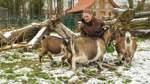 Tierpark Petermoor beherbergt einheimische und vom Aussterben bedrohte Arten