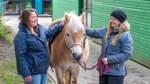 Aufs richtige Pony gesetzt