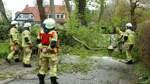 Borgfelder wollen alten Baumbestand retten
