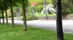 30 Bäume mit Beil oder Messer traktiert