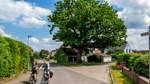 Neues Förderprogramm zum Schutz der Bäume