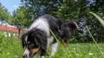 Hundeköder ausgelegt