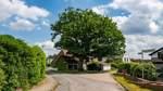 Neues Förderprogramm für Achimer Bäume spaltet die Politik