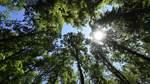 Unternehmen im Norden investieren mehr in Nachhaltigkeit