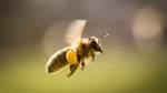 Tipps für bienenfreundlichen Balkon und Garten
