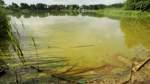 Der Otterstedter See und sein Blaualgen-Problem