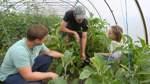 Agrarwende-Gespräche zwischen Salat und Kürbis