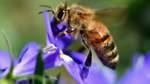 Mehr Schutz für Insekten