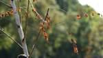 Beirat fordert Ersatz für junge Bäume