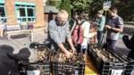 Narzissen und Krokusse in Beckedorf gepflanzt