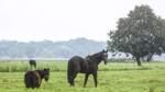 Im Werderland wird Naturschutz und Ökolandbau betrieben
